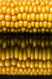 Corn, macro, yellow, ripe, appetizing, food, healthy eating. Macro of ear of corn on black background with reflections Royalty Free Stock Photography