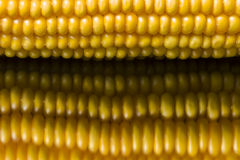 Corn, macro, yellow, ripe, appetizing, food, healthy eating. Macro of ear of corn on black background with reflections Royalty Free Stock Image