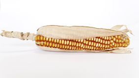 Corn maize-cob Stock Photo