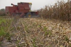 Corn maize harvest. Cobine harvesting corn crops at field Stock Images