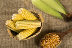 Corn maize and popcorns combined on a table. stock photos