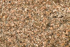 Corn maize silage milled as animal feed. Waste from corn shelling process Stock Images