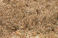 Corn maize silage milled as animal feed. Waste from corn shelling process. Wet corn maize silage milled as animal feed. Waste from the end of corn shelling Royalty Free Stock Images