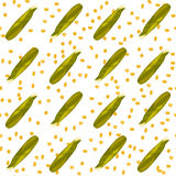 Corn maize vector seamless pattern. Realistic botanical illustration. Royalty Free Stock Photography