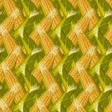 Corn maize vector seamless pattern. Realistic botanical illustration. Stock Image