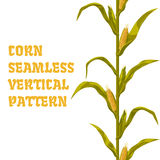 Corn maize vector seamless vertical pattern. Realistic botanical isolated illustration. Corn maize realistic seamless vertical pattern vector illustration Royalty Free Stock Photo