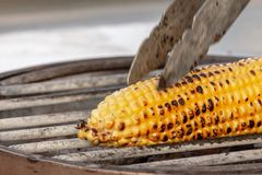 Corn, maize, Zea mays. Corn roasted on fire, grilled maize, Zea mays Stock Photography