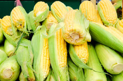 Corn in the market Stock Photo
