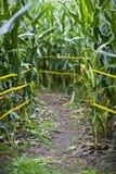 Corn Maze stock images