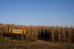 Corn Maze. Entrance to a corn maze in the fall Royalty Free Stock Photography