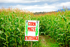 Corn Maze Stock Images