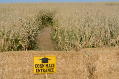 Corn Maze royalty free stock image