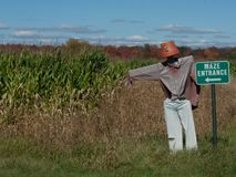 Corn Maze in the Country royalty free stock image