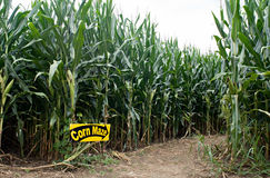 Corn Maze Entrance. Entrance into field of corn that has been cut into the recreational adventure of a maze stock image