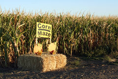 Corn Maze Entrance Stock Photo