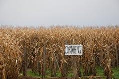 Corn Maze. At the Corn Henge Royalty Free Stock Image