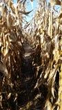 Corn maze Stock Photo