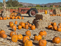Corn Maze and tractor at a Pumpkin Patch Royalty Free Stock Images