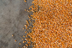 Corn after the milling. Royalty Free Stock Photos