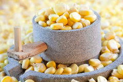 Corn and millstone. Fresh corn seeds and millstone Royalty Free Stock Photos