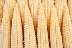 Corn mini Stock Photos