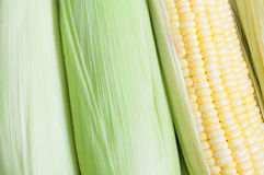 Corns. Nascent corns arranged as background Stock Photos