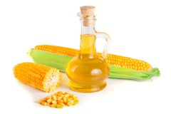 Corn oil in decanter, fresh corn cobs and grains isolated on white background.  Royalty Free Stock Photos
