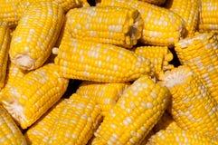 Free Corn On The Cob Stock Image - 32937511