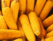 Corn - one fresh cob Royalty Free Stock Photos