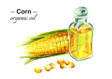 Corn organic oil. Watercolor Royalty Free Stock Photography