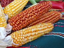 Corn over the table Royalty Free Stock Photography