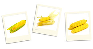 Corn photos Stock Images