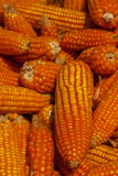Corn pile, Closeup. Royalty Free Stock Photo