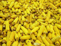Corn in a pile Stock Images