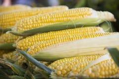 Corn piled up on market Stock Photos