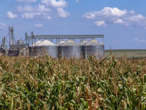 Free Corn Plantation With Silo In The Background Stock Photography - 97119482