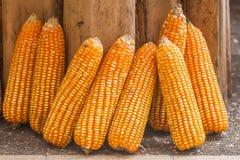 Corn Plants. The Corns and corn plants Royalty Free Stock Image