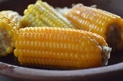 Corn plate. Boiled Corn plate for a eat Royalty Free Stock Photo