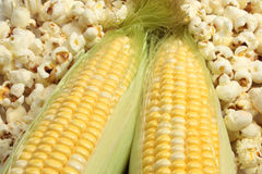 Corn And Popcorn. Corn on cob surrounded by popcorn Stock Photography