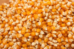 Corn for popcorn as background Royalty Free Stock Photography