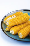 Corn for popcorn Stock Images