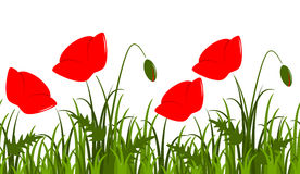 Corn poppy border Royalty Free Stock Photos