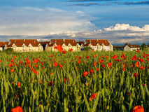 Corn poppy field coral-red bloom in sunset light at suburb royalty free stock image