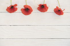 Corn poppy flowers Royalty Free Stock Images