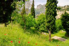 Corn poppy near lake garda Stock Photos