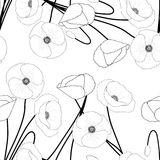 Corn Poppy on White Background. Vector Illustration.  Royalty Free Stock Photos