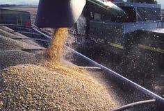 Corn pouring into bin Stock Photos