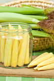 Corn for preserving. Jar with corn preparing for preserving Stock Images
