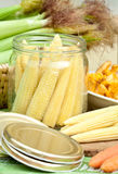 Corn for preserving. Jar with corn preparing for preserving Royalty Free Stock Images