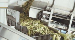Corn processing factory stock video